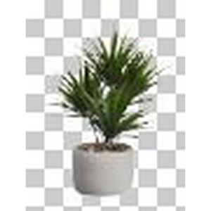 ASA UMĚLÁ ROSTLINA palma - zelená, tmavě zelená, světle zelená